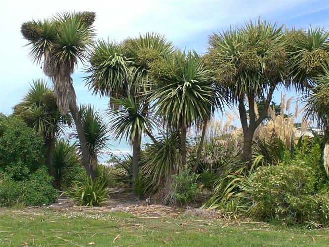 Cabbage trees, ferns and flax